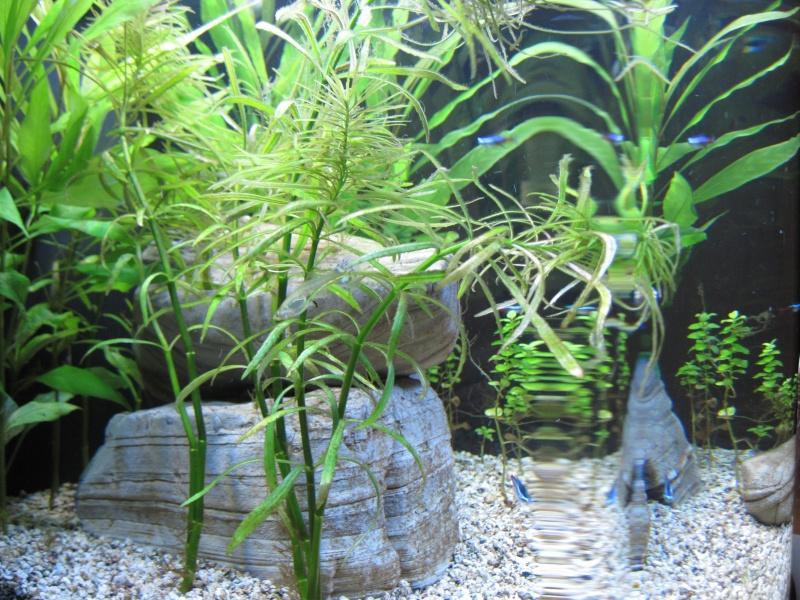 Première photo de mon aquarium Septem14