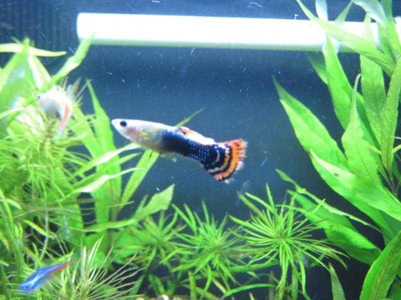 Première photo de mon aquarium Septem17