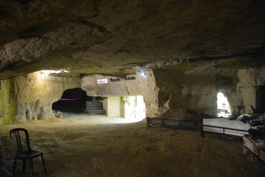 Saumur et son cadre noir Dsc_7820
