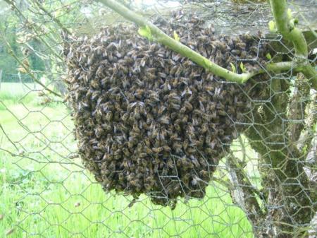 du bon miel!!!! - Page 2 Blog-310