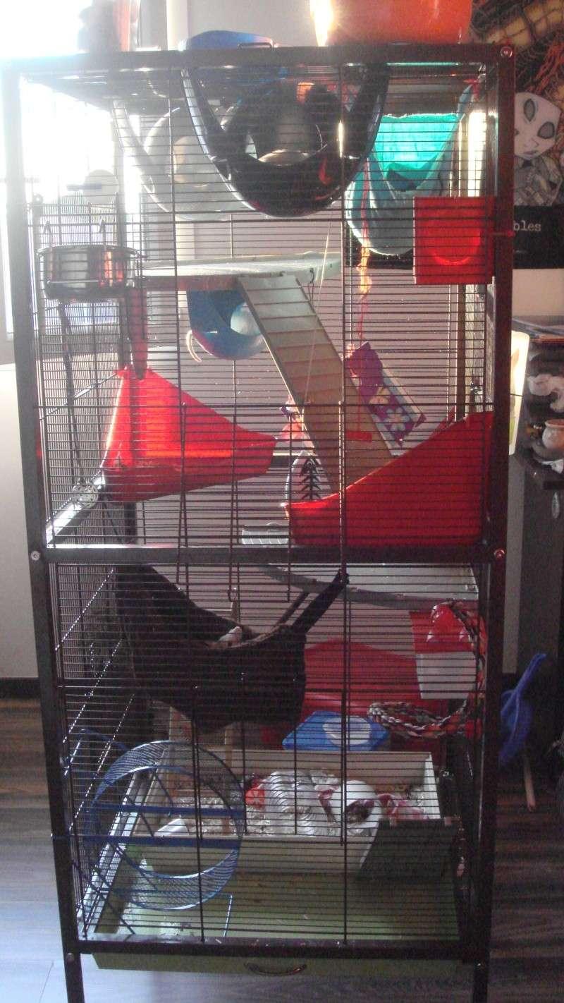 Choisir sa cage Dsc00239