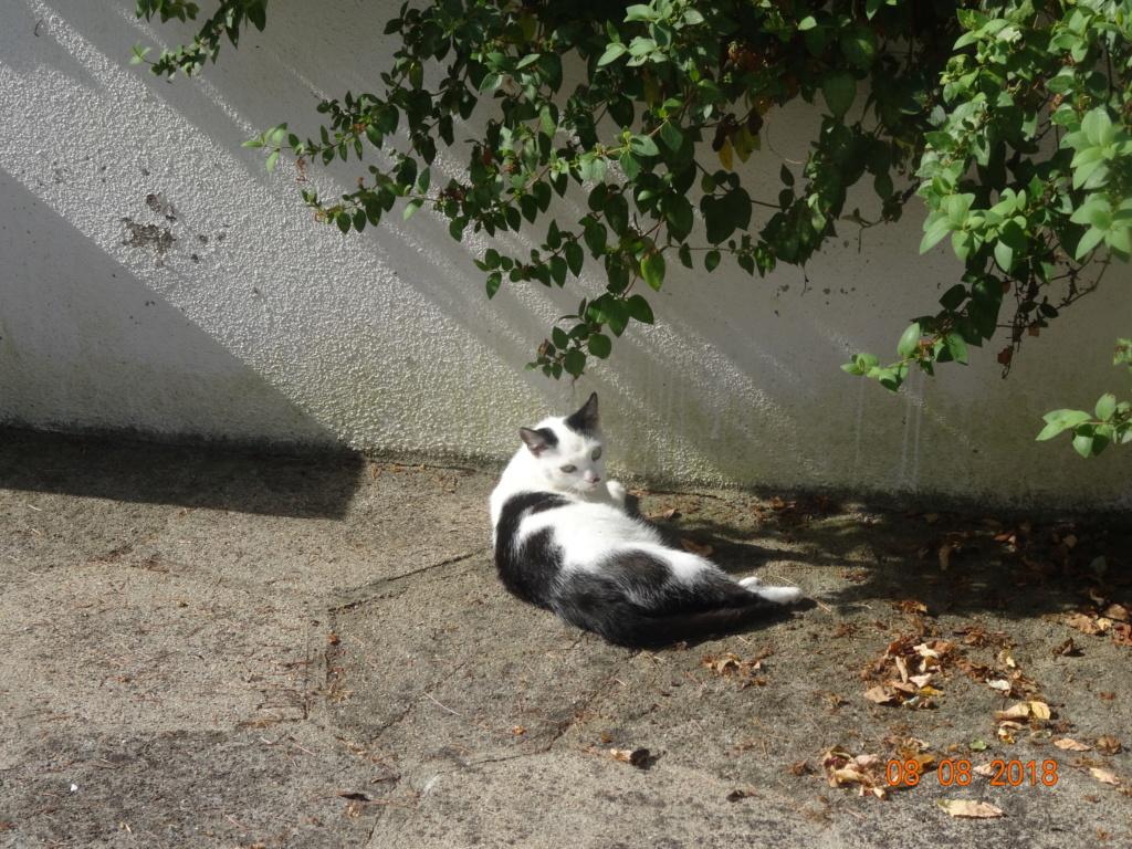 KITTY, Chatte, née  2017 (ORASTIE) Très gentille chatte blessée - en FALD chez TANIA (depart03) 02511