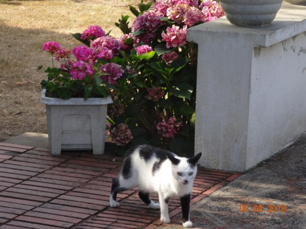 KITTY, Chatte, née  2017 (ORASTIE) Très gentille chatte blessée - en FALD chez TANIA (depart03) 03010