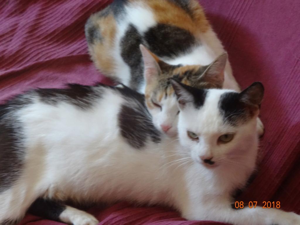 KITTY, Chatte, née  2017 (ORASTIE) Très gentille chatte blessée - en FALD chez TANIA (depart03) 03811