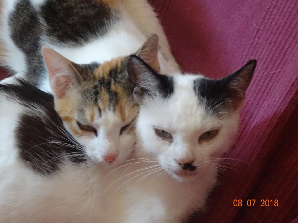 KITTY, Chatte, née  2017 (ORASTIE) Très gentille chatte blessée - en FALD chez TANIA (depart03) 03911