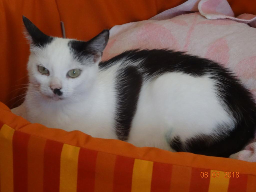 KITTY, Chatte, née  2017 (ORASTIE) Très gentille chatte blessée - en FALD chez TANIA (depart03) 04011