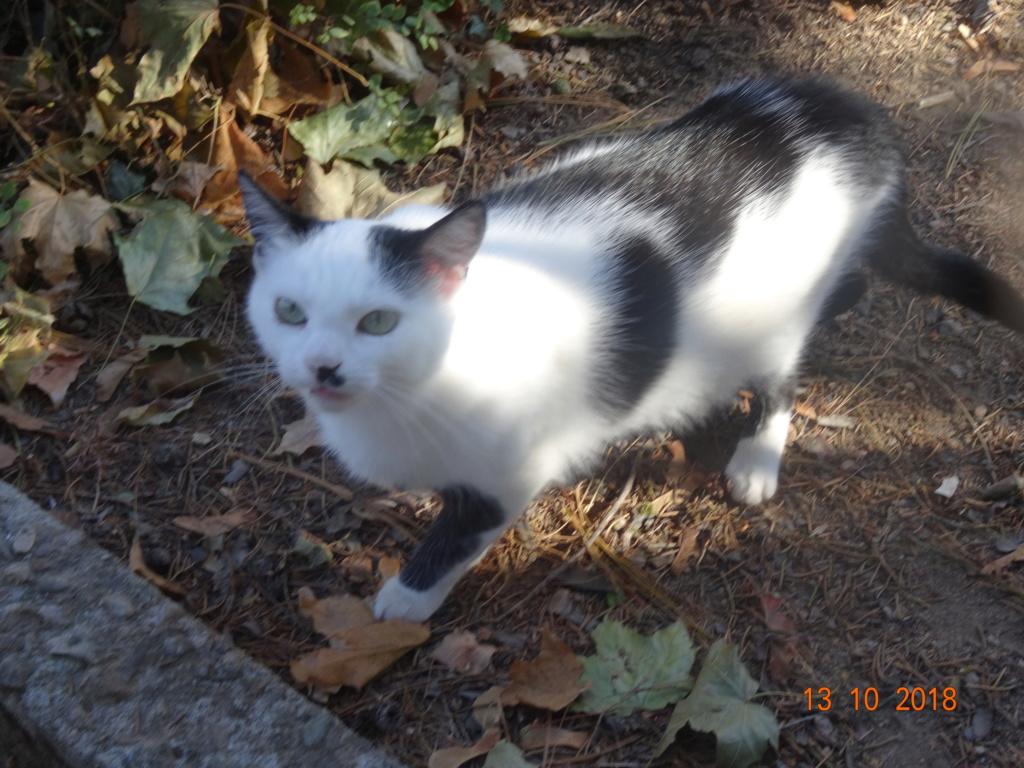 KITTY, Chatte, née  2017 (ORASTIE) Très gentille chatte blessée - en FALD chez TANIA (depart03) 35610