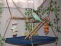 Aire de jeux suspendue avec plateau - Idées 65941210