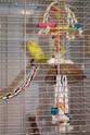 JEUX et LIEUX FAVORIS de nos oiseaux - Page 2 Jouets10