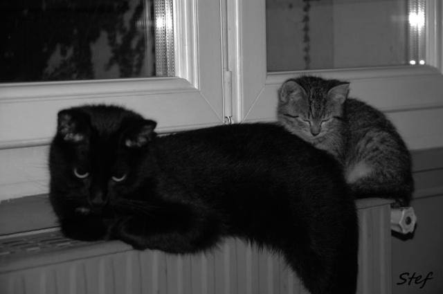 Rosie, chaton tigré, née le 15 aout 2012 60392310