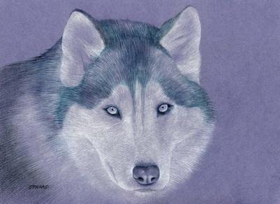 tatouage - Page 4 Husky_12
