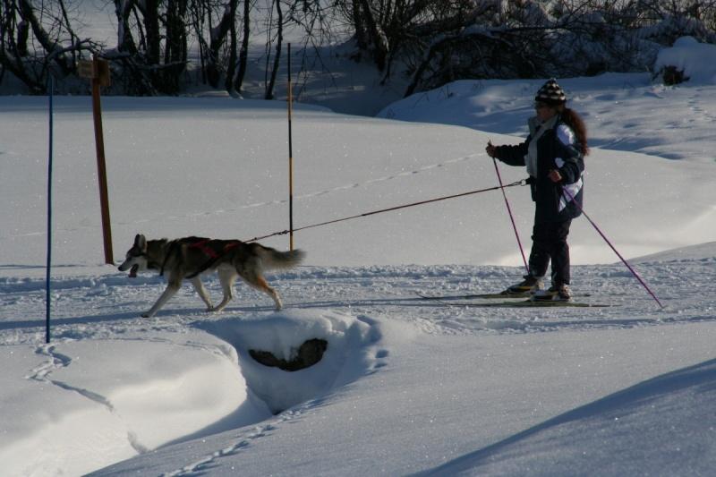 Nos loups grandissent, postez nous vos photos - Page 7 Img_6811