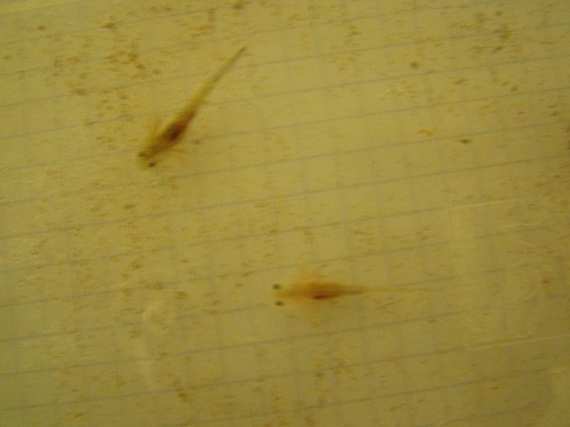 le bac des axolotls 00510