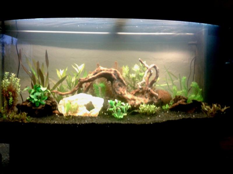 Mon aquarium planté Amazonien 260 litres Aquari13