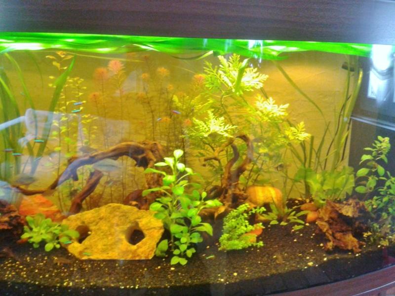Mon aquarium planté Amazonien 260 litres Aquari15