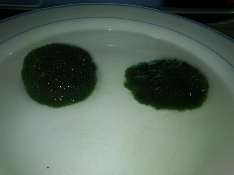 [Tuto] Faire un tapis de cladophora . Dsc_0115