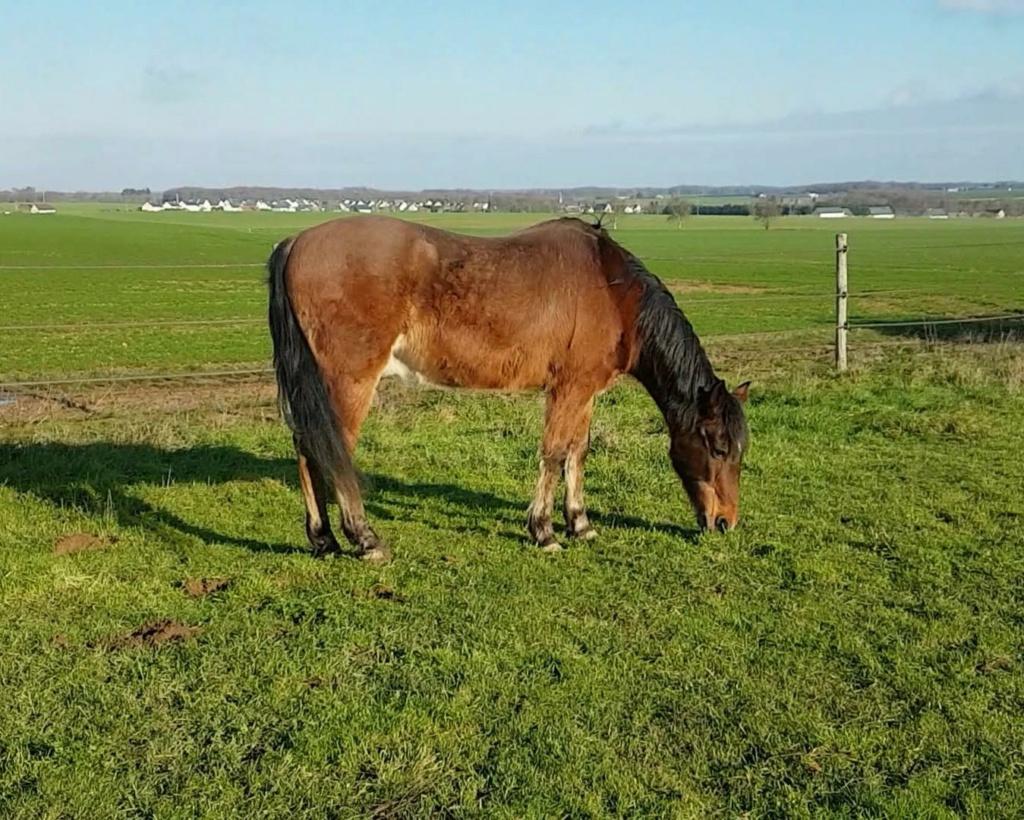(37) BOUNTY - ONC poney né en 1995 - 134 euros + don libre (montable pour balade en main) 412