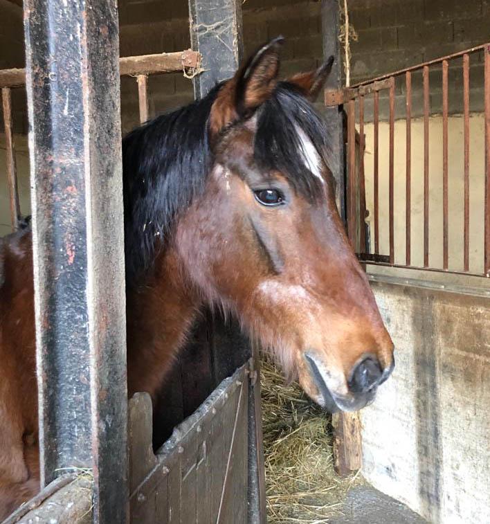 (37) BOUNTY - ONC poney né en 1995 - 134 euros + don libre (montable pour balade en main) Bounty23