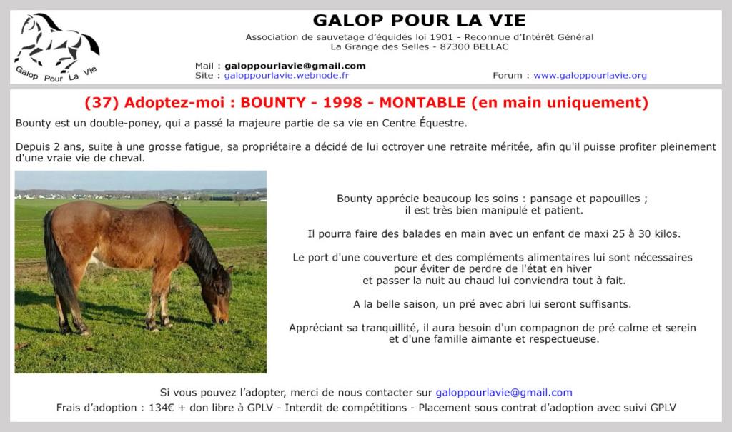 (37) BOUNTY - ONC poney né en 1995 - 134 euros + don libre (montable pour balade en main) Bounty24