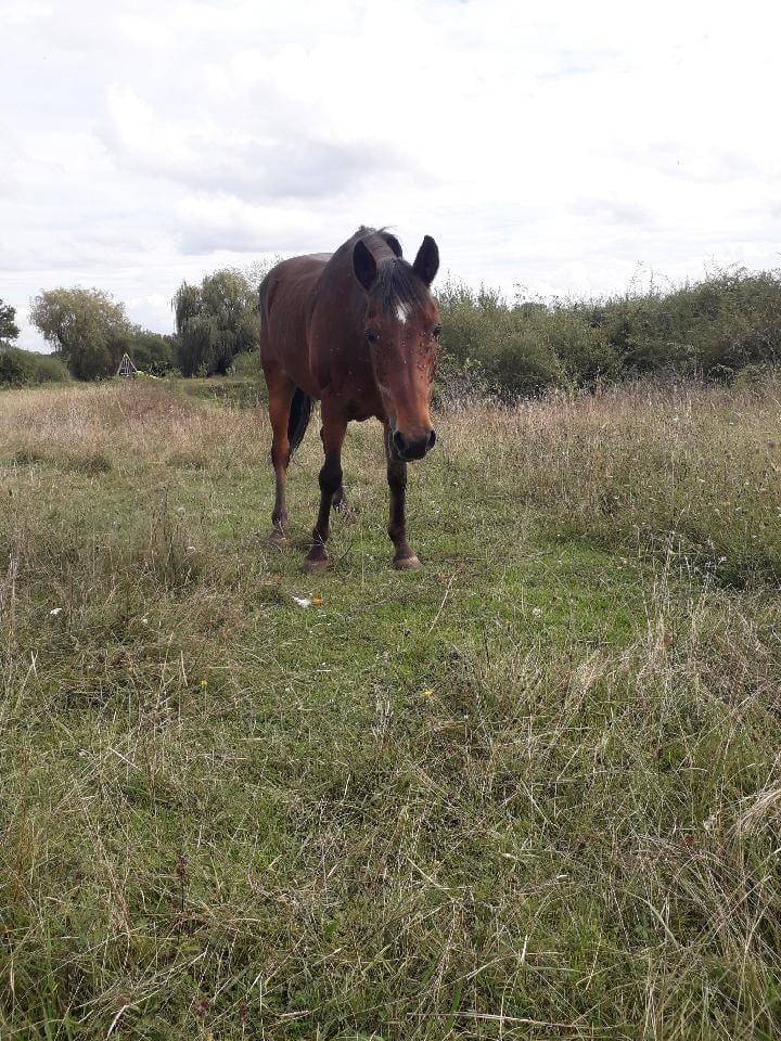 BOUNTY - ONC poney né en 1995 - adopté en septembre 2021 par Anne-Sophie Bounty25