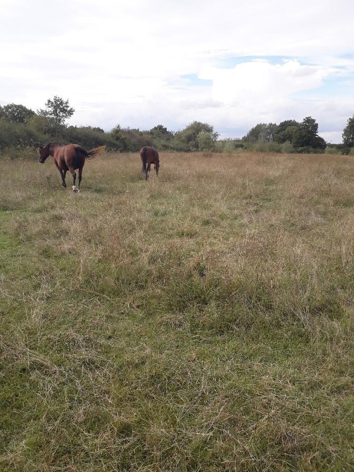 BOUNTY - ONC poney né en 1995 - adopté en septembre 2021 par Anne-Sophie Bounty26
