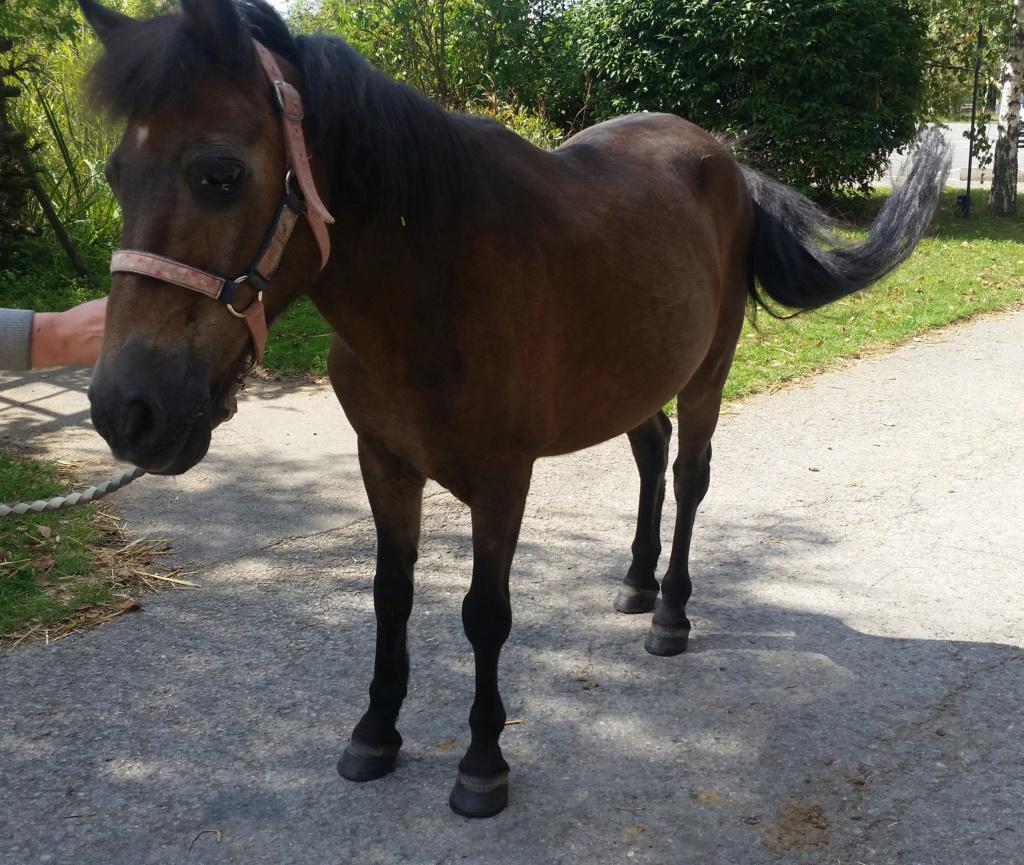 DAKAR - ONC poney né en 1998 - adopté en mars 2020 par Patricia Dakar_10