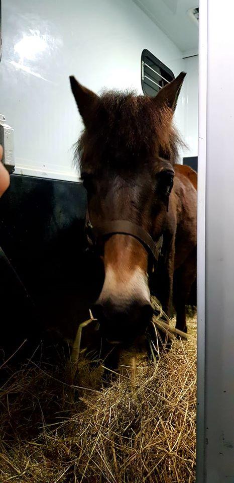 DAKAR - ONC poney né en 1998 - adopté en mars 2020 par Patricia Dakar_11