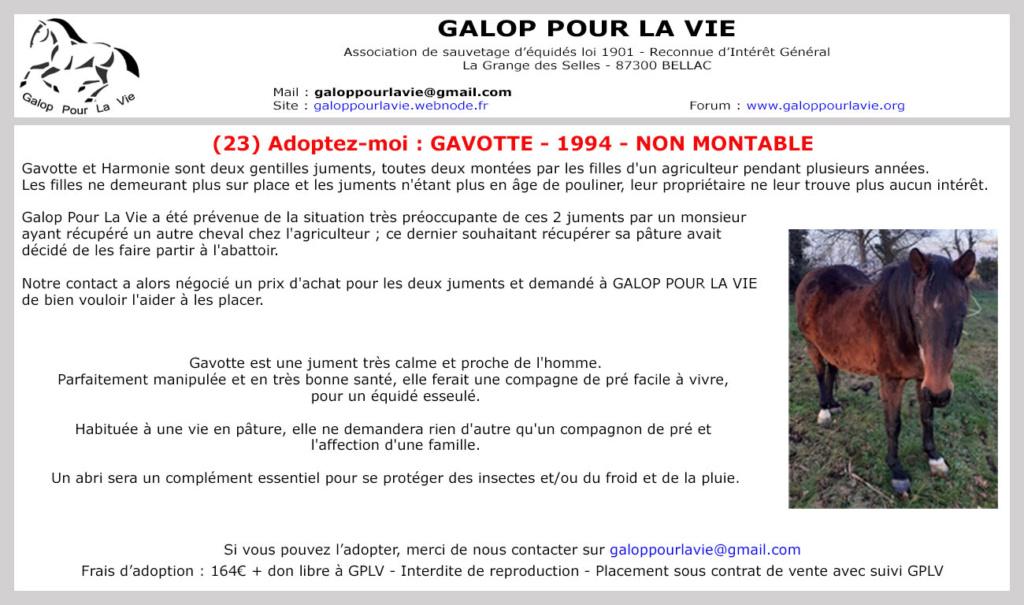 (23) GAVOTTE - SF née en 1994 - 164 euros + don libre  - NON MONTABLE Gavott12