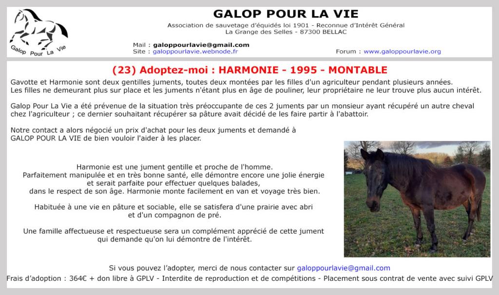 (23) HARMONIE - SF née en 1995 - 364 euros + don libre Harmon10