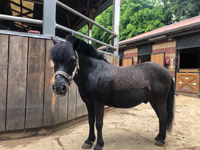 QUOQUIN - ONC poney né en 2004 - adopté  en  juillet 2021 par Maryon Image111
