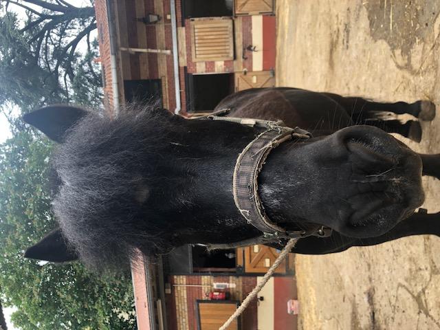QUOQUIN - ONC poney né en 2004 - adopté  en  juillet 2021 par Maryon Image311