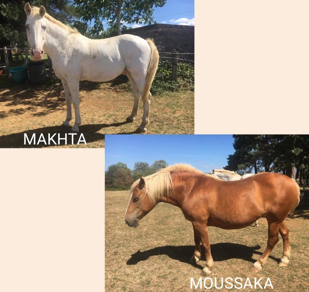 MAKHTA  (ONC Selle aveugle) & MOUSSAKA (OI Poney typée Comtoise) nés en 2000 - adoptés en décembre 2020 par Muriel Img_2036