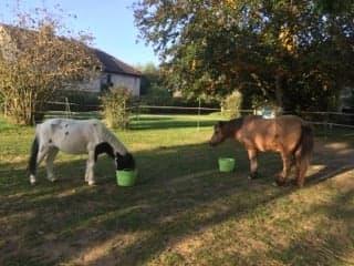 JINGER - ONC poney né en 2000 - adopté en octobre 2019 par Michelle Jinger12