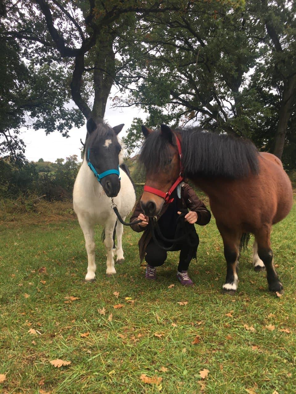NESTOR - ONC poney né en 2001 - adopté en octobre 2019 par Carol Oscar_11