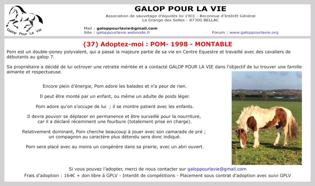 (37) POM (pomm) - ONC poney né en 1998 - 164 euros + don libre Pom10