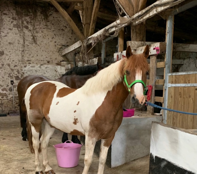 POM (pomm) - ONC poney né en 1998 - adopté en mai 2021 par Heidi Pomm_110