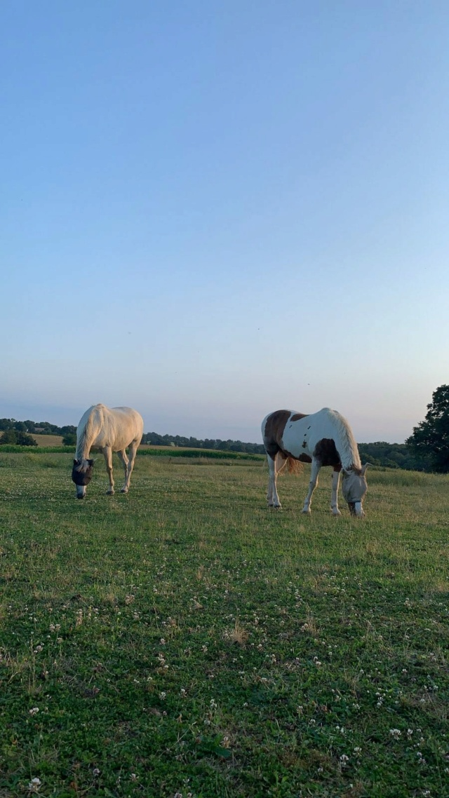 POM (pomm) - ONC poney né en 1998 - adopté en mai 2021 par Heidi Pomm_210