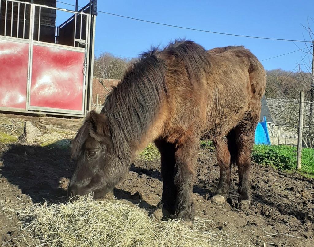 (02) ZEBULON - ONC poney né en 1997 - NON MONTABLE - A ADOPTER (126 € + don libre)   Zzobul10