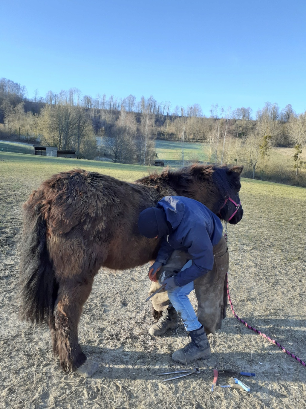 (02) ZEBULON - ONC poney né en 1997 - NON MONTABLE - A ADOPTER (126 € + don libre)   Zzobul16