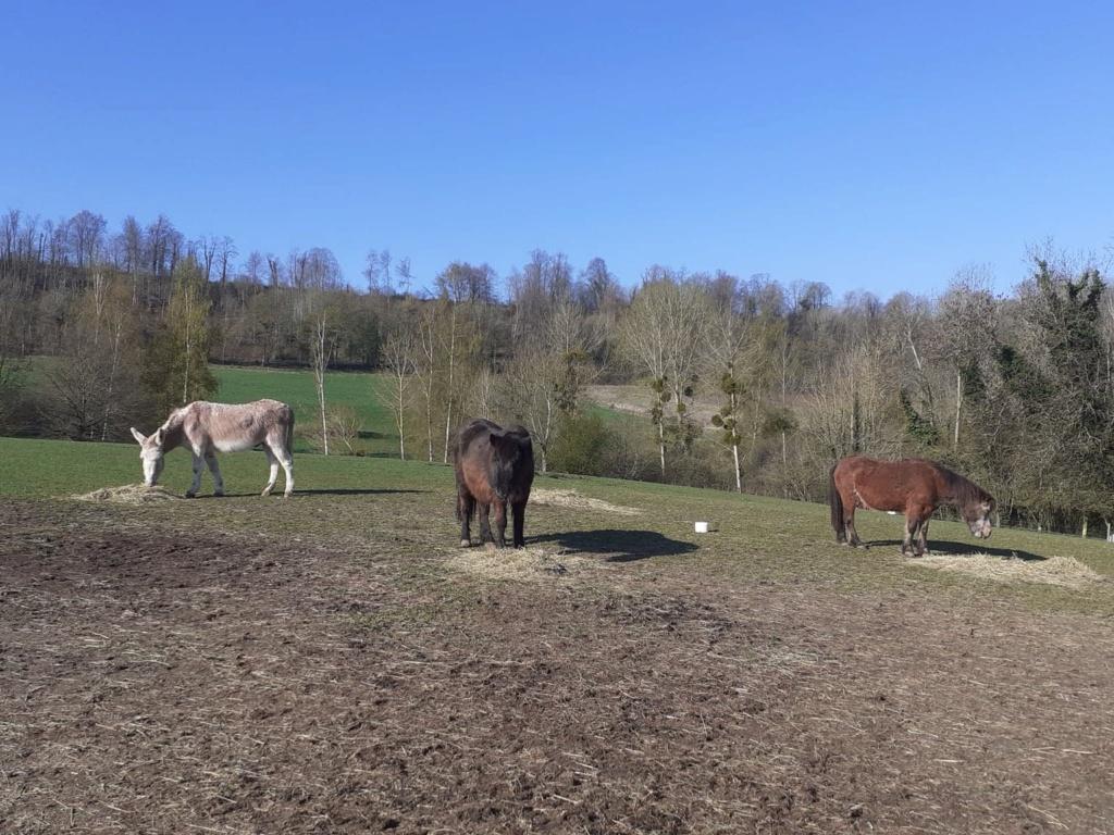 (02) ZEBULON - ONC poney né en 1997 - NON MONTABLE - A ADOPTER (126 € + don libre)   Zzobul18