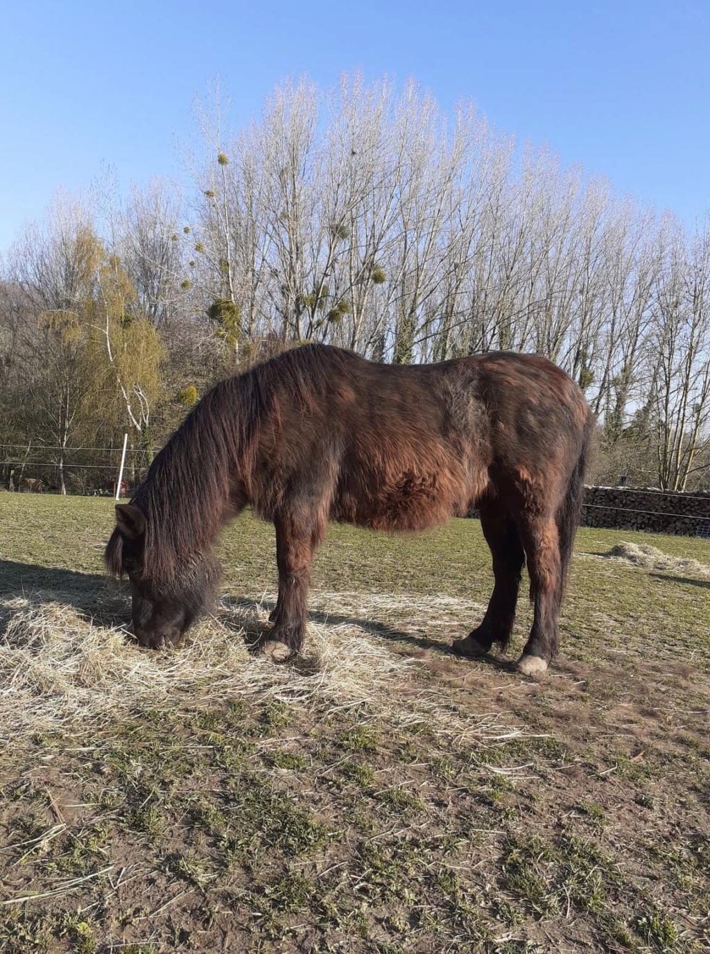 (02) ZEBULON - ONC poney né en 1997 - NON MONTABLE - A ADOPTER (126 € + don libre)   Zzobul19