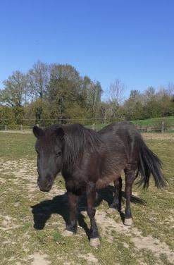 ZEBULON - ONC poney né en 1997 - adopté en mai 2021 par Marie-Christine Zzobul26
