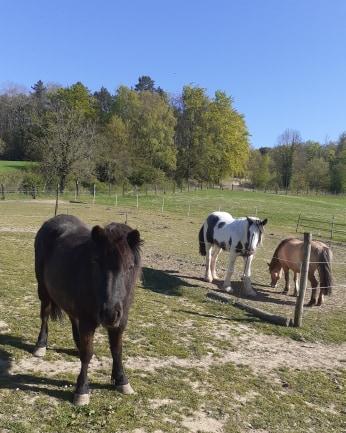 ZEBULON - ONC poney né en 1997 - adopté en mai 2021 par Marie-Christine Zzobul28