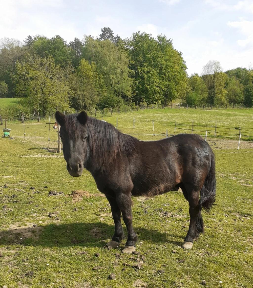 ZEBULON - ONC poney né en 1997 - adopté en mai 2021 par Marie-Christine Zzobul30