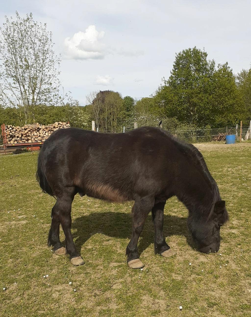 ZEBULON - ONC poney né en 1997 - adopté en mai 2021 par Marie-Christine Zzobul31