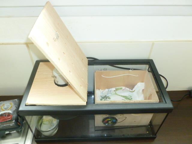 Comment fabriquer une éleveuse? P1290116