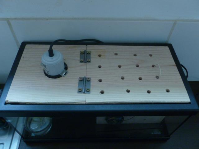Comment fabriquer une éleveuse? P1290117