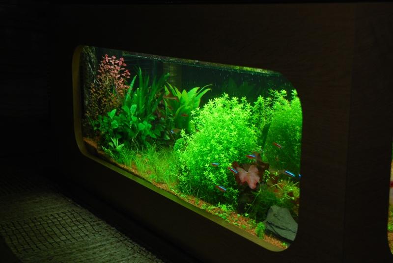 aquarium table basse (nouvel hardscape) - Page 2 Dsc_0011