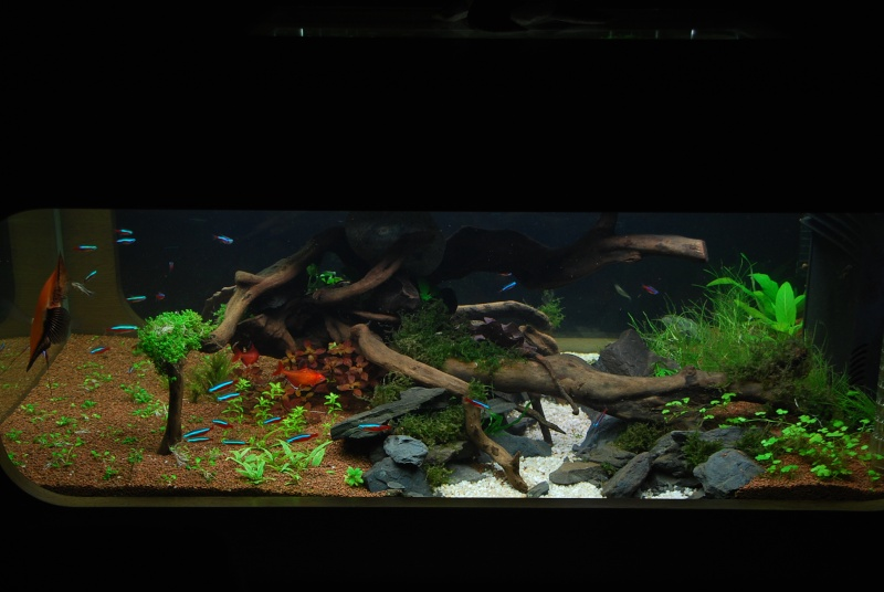 aquarium table basse (nouvel hardscape) - Page 2 Dsc_0110