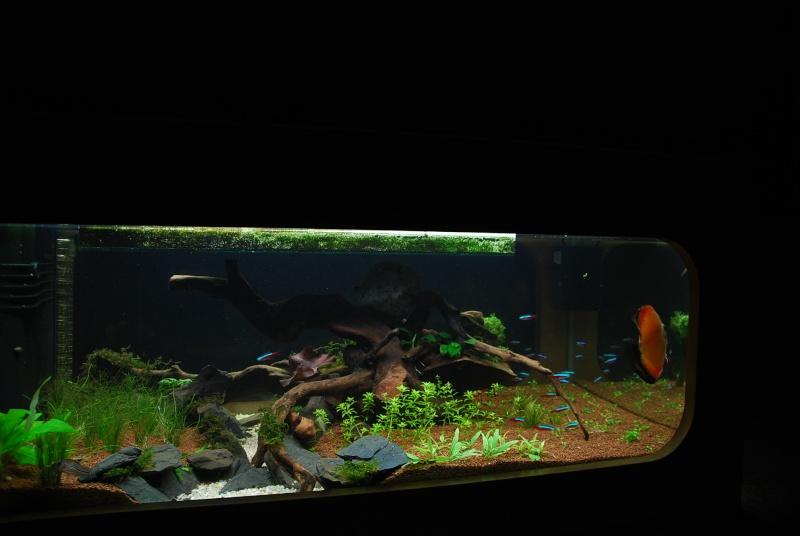 aquarium table basse (nouvel hardscape) - Page 2 Dsc_0113
